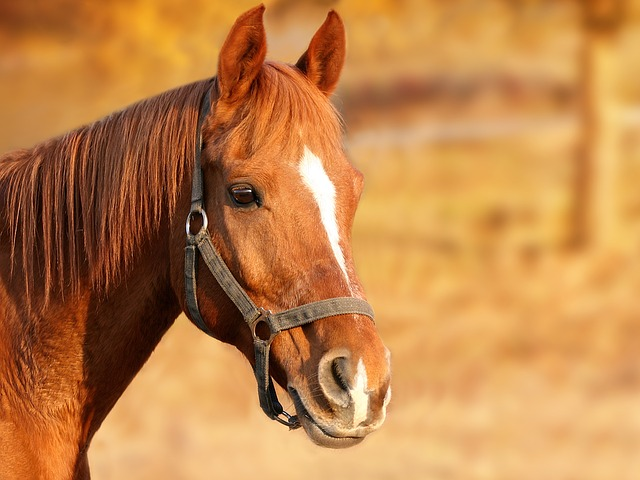 Horsing around: A new form of aged-care therapy
